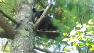 Bear Video 002