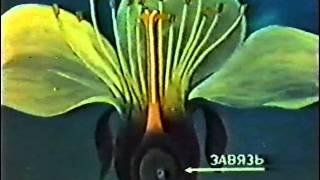 Оплодотворение цветковых растений(«Школфильм» Подробнее: http://allforchildren.ru/scivideo/bio7-25.php., 2015-11-09T17:00:43.000Z)