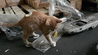 Что будет, если коту приклеить скотч на все 4 лапы