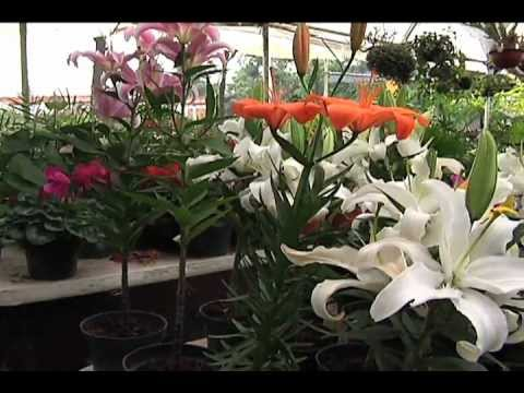 m s verde plantas representativas de m xico youtube