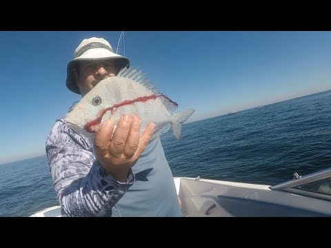 Gulf of Mexico Exotic Reef Fishing