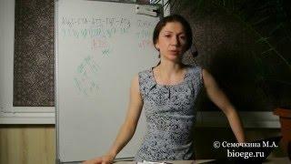 Задачи по цитологии: Задачи на образование разных типов РНК на матрице ДНК 1