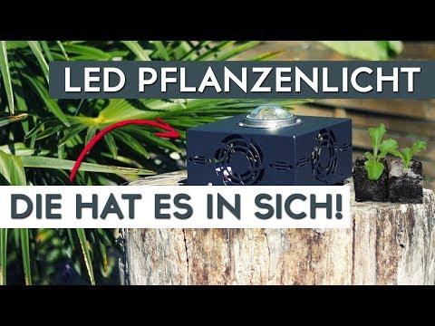 gemma-led-grow-light---diese-pflanzenlampe-hat-mich-überzeugt!