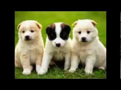 Patna Dogs Service Call Us Youtube