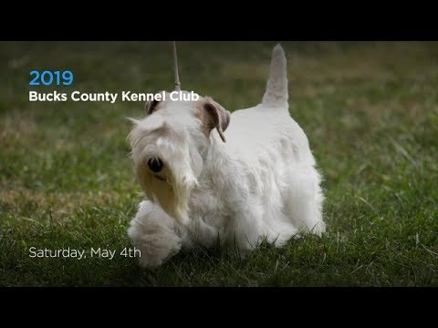 2019 Bucks County Kennel Club Dog Show