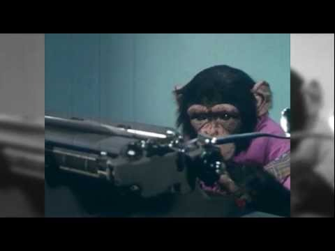 Monkey Screenwriter