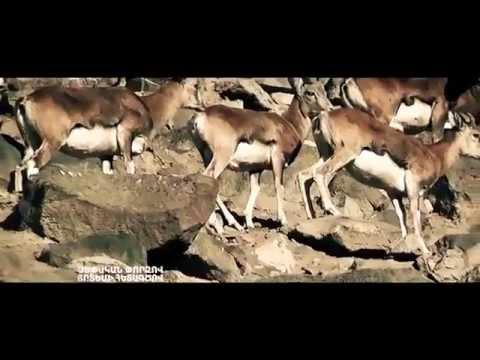 Armenia Полноправные хозяева наших гор