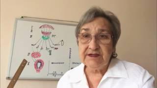 Менструальный цикл и его регуляция (46)