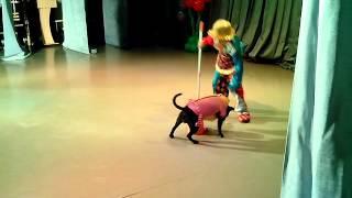 Дрессированная собака с ребенком видео
