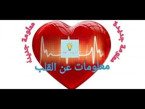 معلومات عن قلب الإنسان | ❤