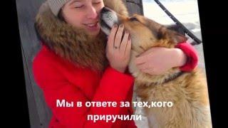 Собака - друг человека? (социальная реклама)