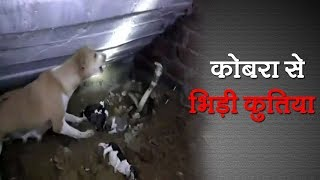 A Cobra Attacked Dog's Puppies In Odisha's Bhadrak | Talented India Video