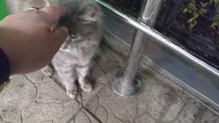 Кошки говорят люблю есть и хочу. Самое милое видео!