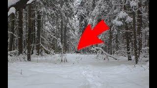 ЭКСКЛЮЗИВ, охота на лося, в погоне !!!