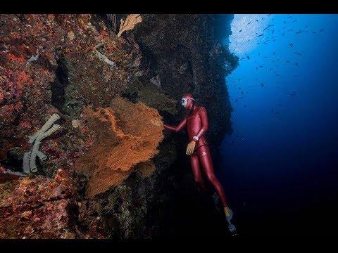 自由潛水小知識| 一個AIDA教練要具備什麼能力