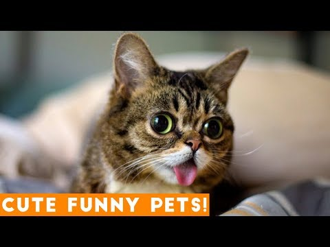 Cute Funny Pets Compilation 2018! | Funny Pet Videos