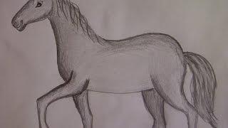 КАК НАРИСОВАТЬ КОНЯ (ЛОШАДЬ) (очень просто, для начинающих)(Здравствуйте! Предлагаю вашему вниманию видеоролик, где я показываю, как очень просто нарисовать лошадку,..., 2015-03-23T16:12:10.000Z)
