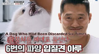 A Dog Who Had Been Discarded Six Times Bit Trainer Kang [Dogs Are Incredible]