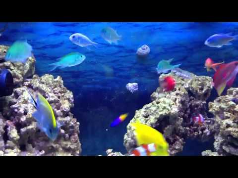 125 Gallon Saltwater Schooling Fish