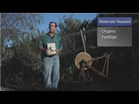 Growing Blueberries How To Fertilize Blueberry Bushes Organi