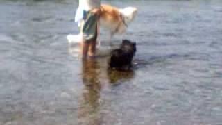星羅は初めての 川遊びです。