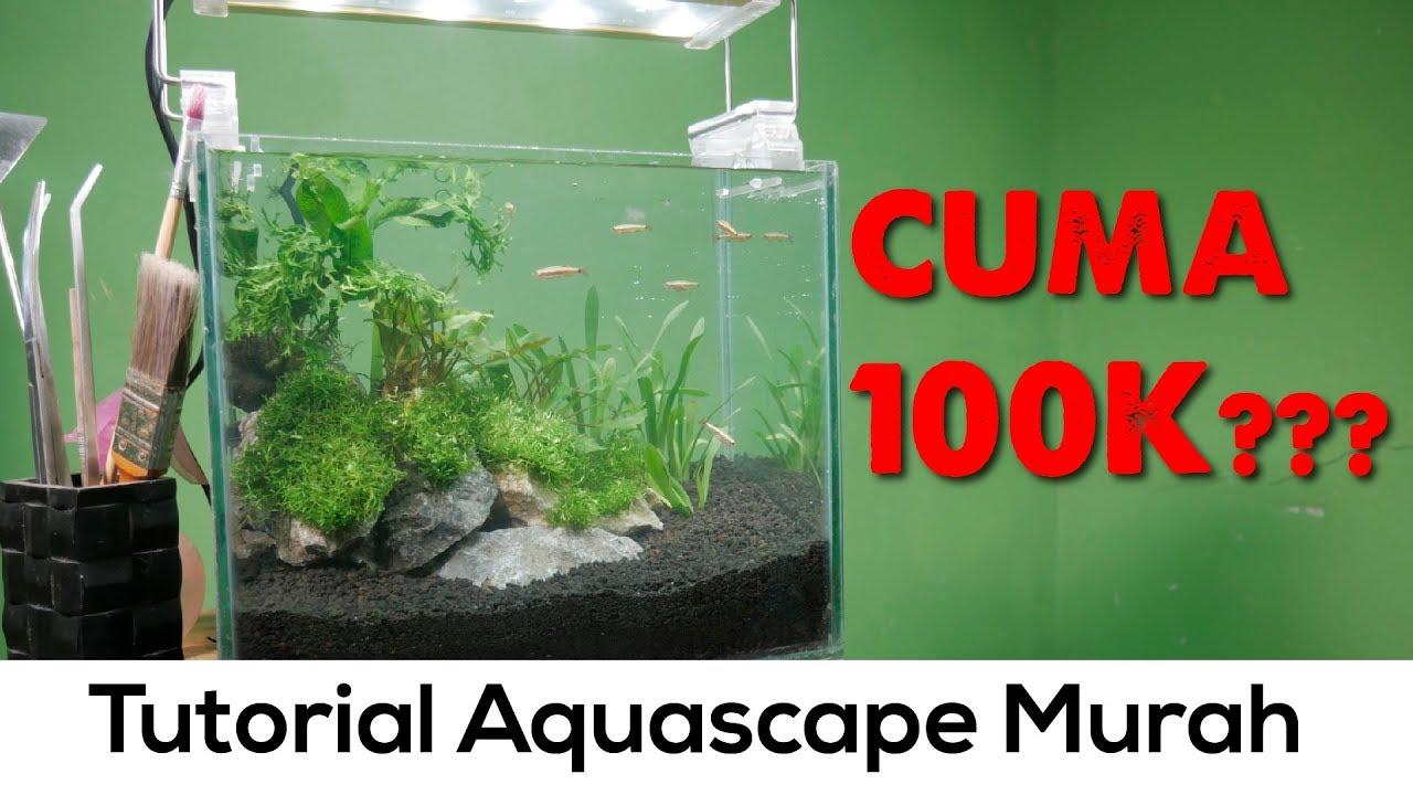 Aquascape Rimbun Tanpa Bikin Dompet Gersang Tutorial Aquascape 30cm Natural Pojok Tutorial 2 Youtube