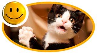 ❶ Приколы с животными, смешные видео ролики про животных