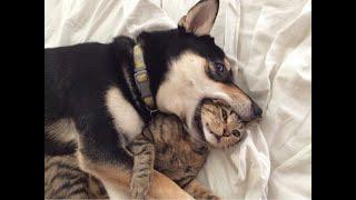 ПРИКОЛЫ С КОТАМИ И СОБАКАМИ 2021 Приколы со смешными животными Смешные котики Подборка 10