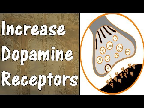 How To Get More Dopamine | PART 2 | Increase Dopamine Receptors