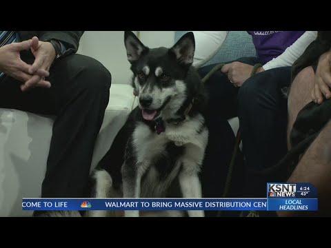 Adopt a Pet: Keeta and Chloe | SuperNewsWorld com