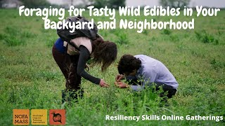 Foraging for Tasty Wild Edibles in Your Backyard and Neighborhood with Russ Cohen: Resiliency Skills