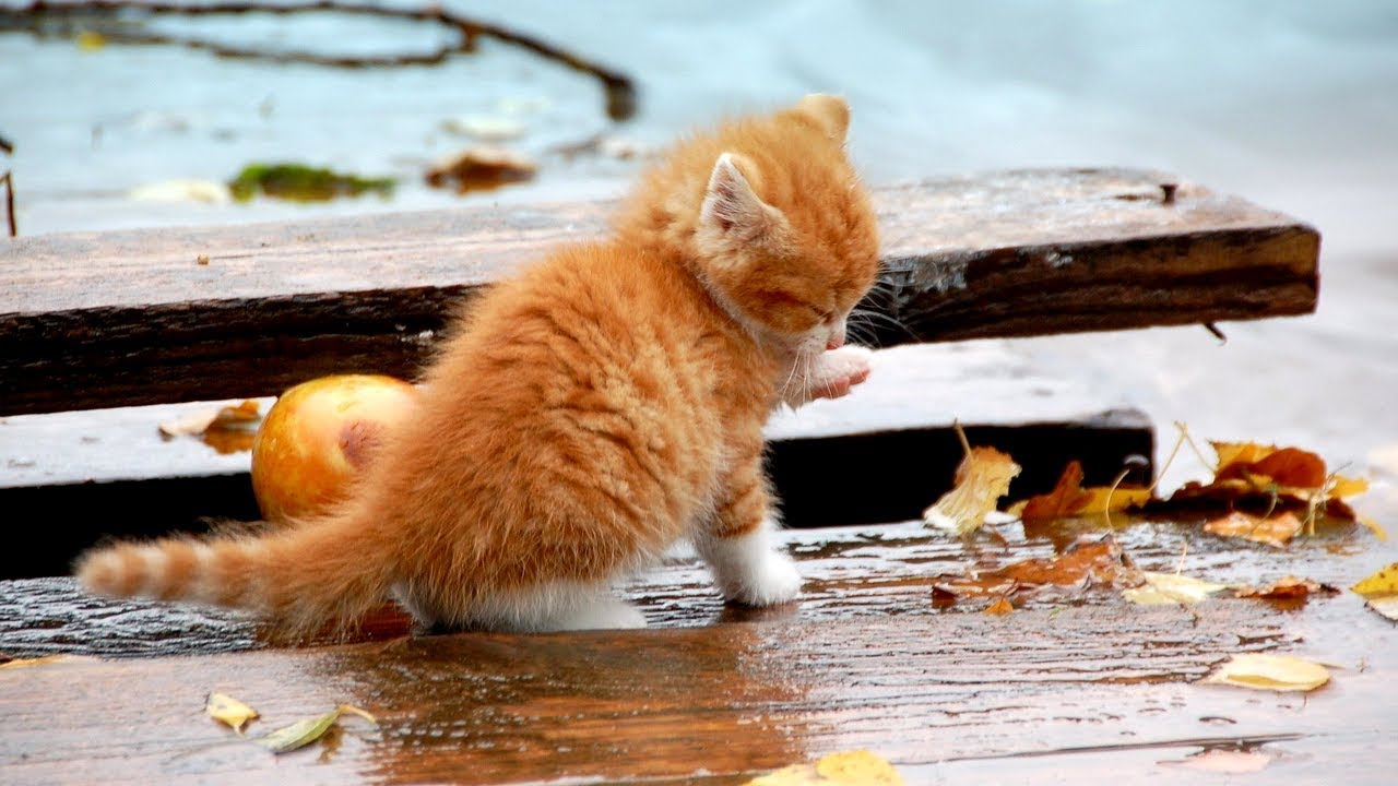История про собаку кот
