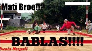 Download Video SANGKING KENCANGNYA SAMPAI BABLAS!!!! Burung dara mati ditempat!!!! MP3 3GP MP4
