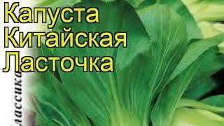 Капуста китайская Ласточка. Краткий обзор, описание характеристик brássica olerácea