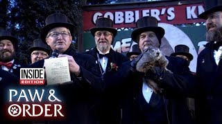 Paw & Order: Punxsutawney Phil Threatened for Lying About Weather Forecast