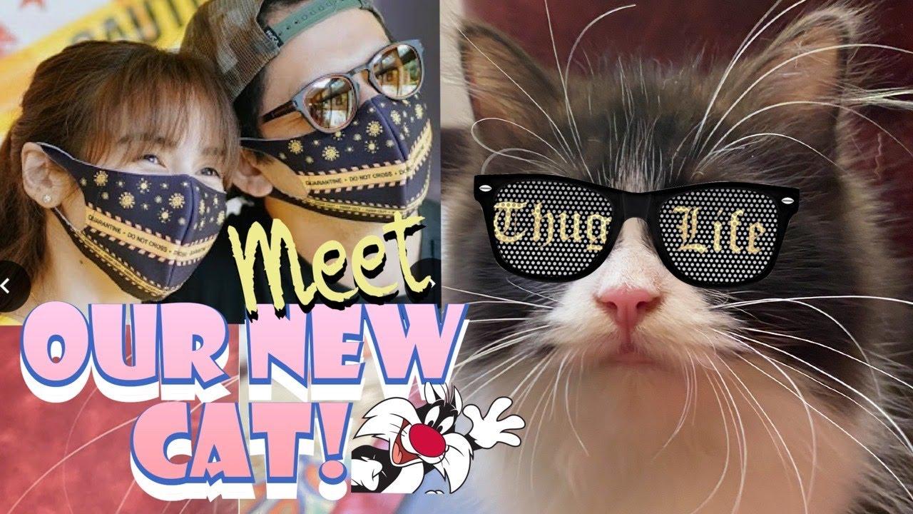 Meet Our New Cat!