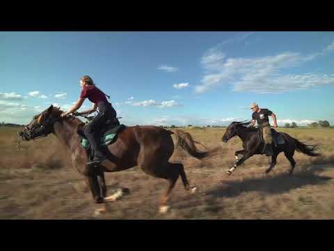 Вопрос: Как скакать галопом на лошади?