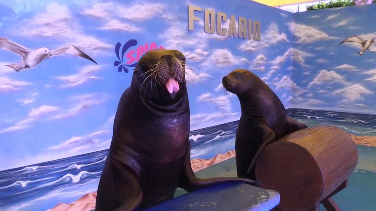 Splash Parque Acuático León-Silao Atractivo: Show de Focas - YouTube