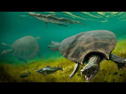 Fossils shed new light on car-sized turtle that once roamed South America