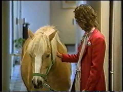 Best Of Verstehen Sie Spass Pferd Auf Dem Flur Mit Birgit Schrowange Youtube