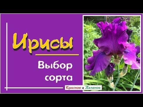 Вопрос: Какова садовая классификация ирисов?