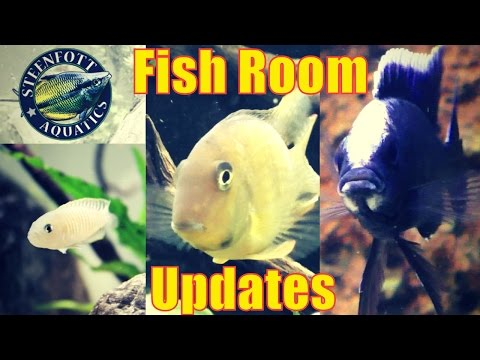 More Fish Room Updates - 75 Gallon Planted Aquarium - 55 And 40 Gallon Cichlid Aquarium