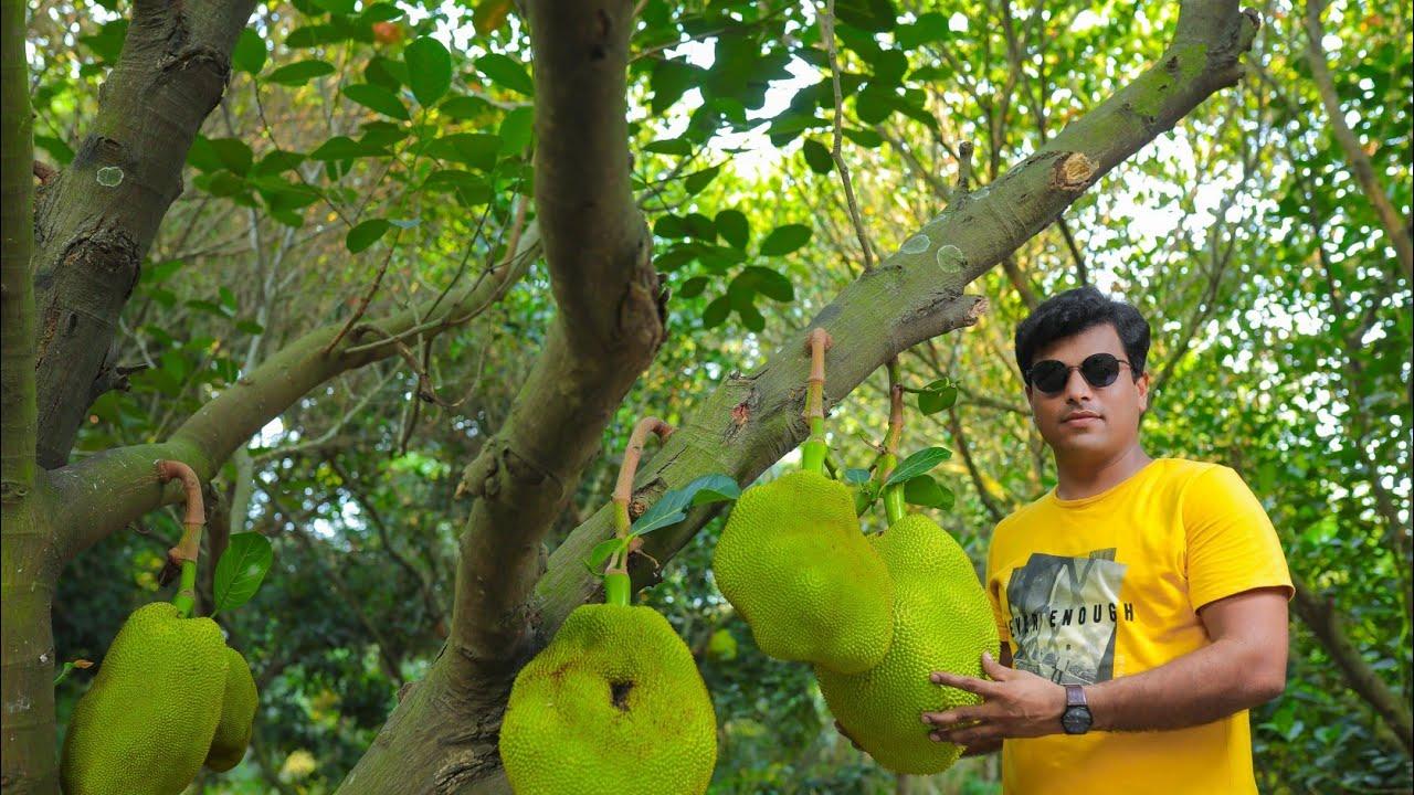 forestry fruits - farm for sale in kadapakkam on ECR - Mr. Tamilselvan : 9047281868
