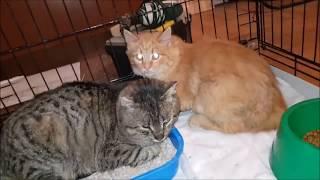 Кошки из заброшенного дома. Продолжение. Здесь начало https://youtu.be/etq9Noa2avA