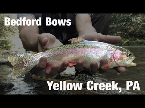 WB - Fly Fishing Yellow Creek, Bedford County, PA - August '17
