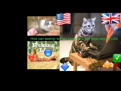 How can seeing/ top ten funny cats/and dogs playing USA
