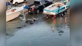 Boat Fails of the Week for May 4 2020 - Brought to you by Haulover Inlet