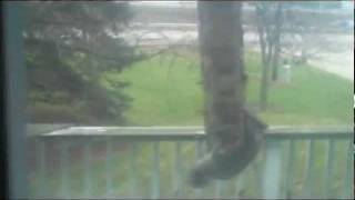 Squirrel Long Jump to Anti-Squirrel Feeder