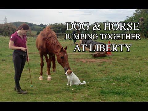 Horse and dog jumping at liberty | Heros & Kira