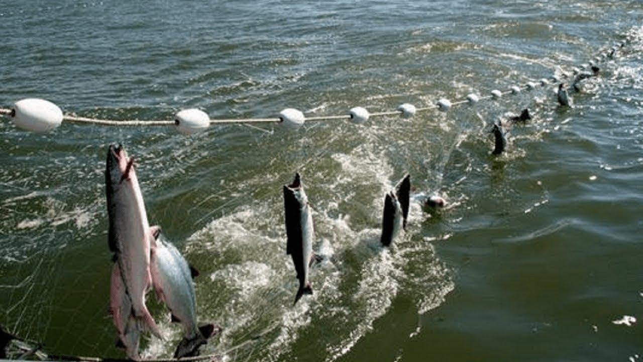ตื่นตะลึ่งการจับปลา ทำแบบนี้นี่เองต่างประเทศ【ทึ่งทั่วโลก】✅